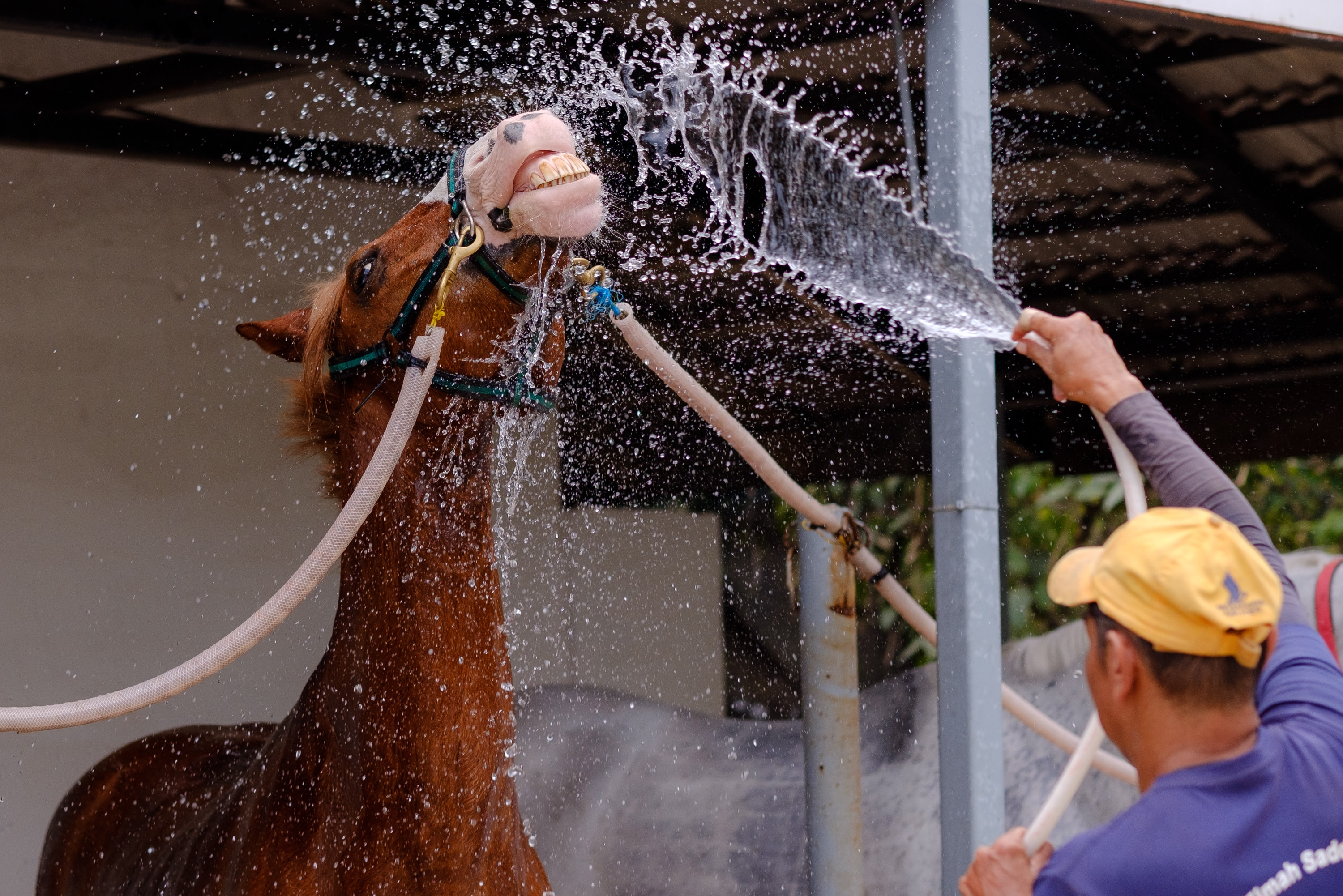 How to keep your horse cool