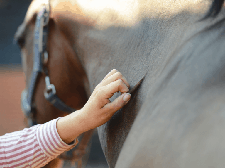How to check if you horse is dehydrated